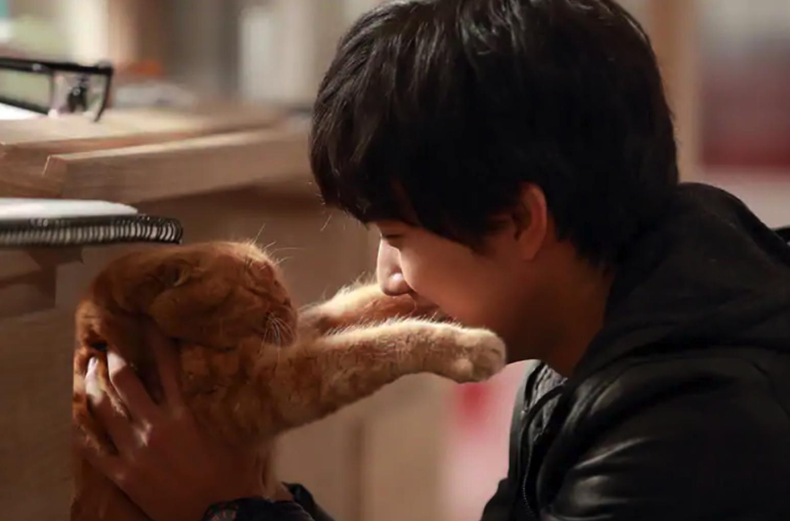 想像ネコ~僕とポッキルと彼女の話~あらすじ